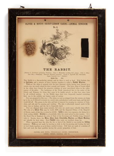 P410 Object lesson card, part of collection, 'The Rabbit', framed, fur / felt / cardboard / glass / wood / plastic / textile, published by Oliver and Boyd, Edinburgh, Scotland, 1880-1884
