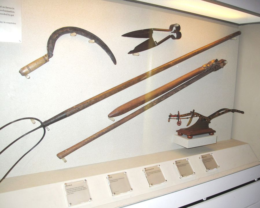 H5471 Harvesting tools, jointed flails (2), handmade, wood/leather, unknown maker, probably made in New South Wales and used in New South Wales, Australia, 1800s. Click to enlarge.