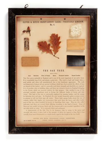 P424 Object lesson card, part of collection, 'The Oak Tree', framed, leaf / bark / leather / cardboard / glass / wood / plastic / paper, published by Oliver and Boyd, Edinburgh, Scotland, 1880-1884