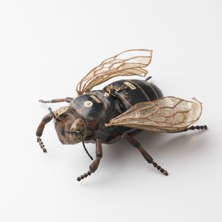1148 Insect model, queen bee, papier mache / metal, made by Dr Auzoux, Paris, France, 1883