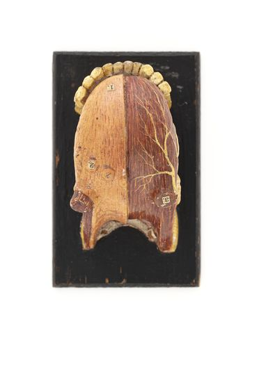 H1745 Anatomical model of a human tongue, wood, maker unknown, place of production unknown, used by Sydney Technical College, Sydney, New South Wales, Australia, 1850-1894