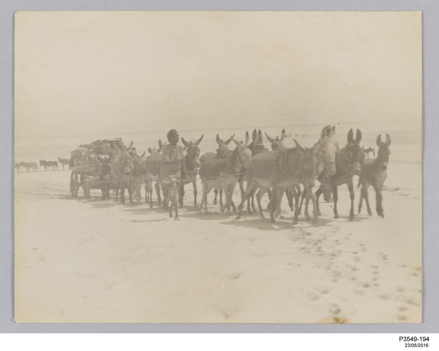 P3549-194 Photographic print, Wallal eclipse expedition unloading equipment, paper / silver gelatin, photographer unknown, used at Sydney Observatory, Wallal, Western Australia, 30 August - 1 September, 1922. Click to enlarge.