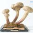 Image 1 of 1, D911 Botanical model, fungus, Agaricus melleus or Armillaria mellea, plaster / papier-mache, made by Viktor Dürfeld, purchased from Chrétian Vetter, Hamburg, Germany, 1890. Click to enlarge