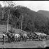 Image 1 of 1, 85/1284-1638 Glass plate negative, full plate, 'The Settlers Wagon', Kerry and Co, Sydney, Australia, c. 1884-1917. Click to enlarge