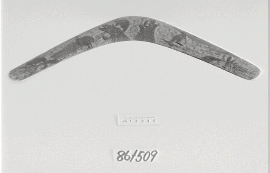 86/509 Boomerang, wooden, Australia. Click to enlarge.