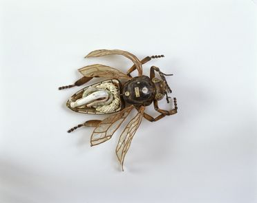 1153 Insect model, worker bee, papier mache / metal / hair, made by Dr Auzoux, Paris, France, 1883