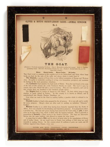 P409 Object lesson card, part of collection, 'The Goat', framed, mohair / leather / cardboard / glass / wood / textile, published by Oliver and Boyd, Edinburgh, Scotland, 1880-1884