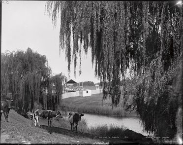 85/1284-28 Glass plate negative, full plate, 'On South Creek', Kerry and Co, Sydney, Australia, c. 1884-1917