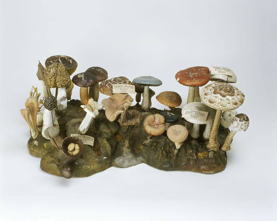 2796 Botanical models (30), edible and inedible fungi, made by Dr Louis Thomas Jerome Auzoux, France, 1880-1890. Click to enlarge.