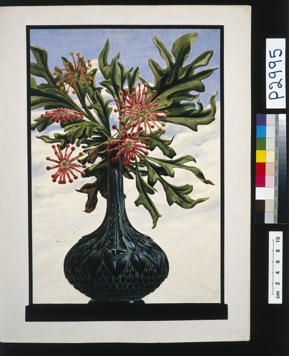 P2995 Designs (2), 'Stenocarpus study (War[atah] Decanter)' and ' Pineapple Butter Cooler and Flower vase combined', from unpublished book, 'Australian Decorative Arts', watercolour over pencil/ photograph, silver gelatin print, sepia toned, made by Lucien Henry, Australia / France, 1889-1891. Click to enlarge.