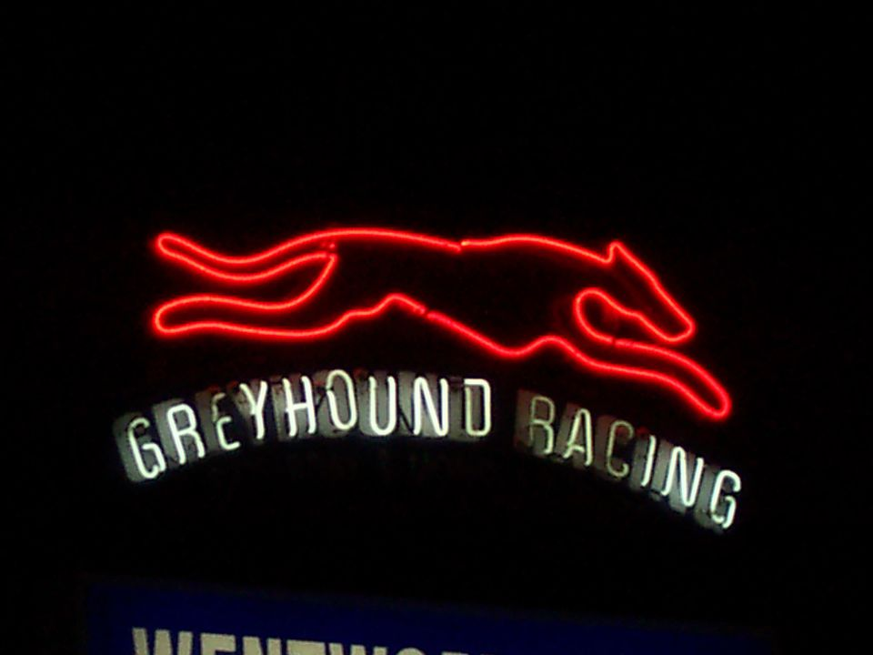 2007/66/1 Neon sign, greyhound, particle board / neon tubes, made by Claude Neon, used by Wentworth Park Raceway, Sydney, New South Wales, Australia, 1993-2006. Click to enlarge.