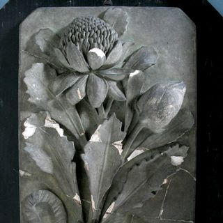 A2431 Plaster decoration, ceiling plaster, waratah, Australian flora, used by Lucien Henry to teach apprentices in building trades and art students at Sydney Technical College, Ultimo, Sydney, New South Wales, Australia, 1882-1891, maker unknown