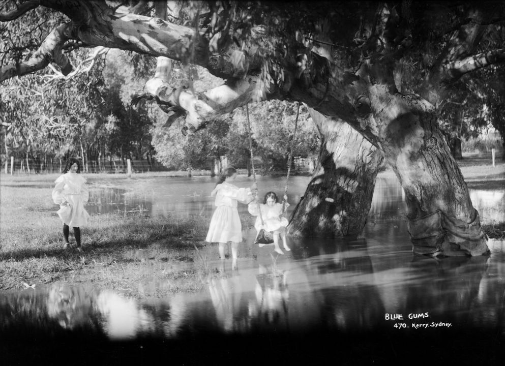 85/1284-265 Glass plate negative, full plate, 'Blue Gums', Kerry and Co, Sydney, Australia, c. 1884-1917. Click to enlarge.