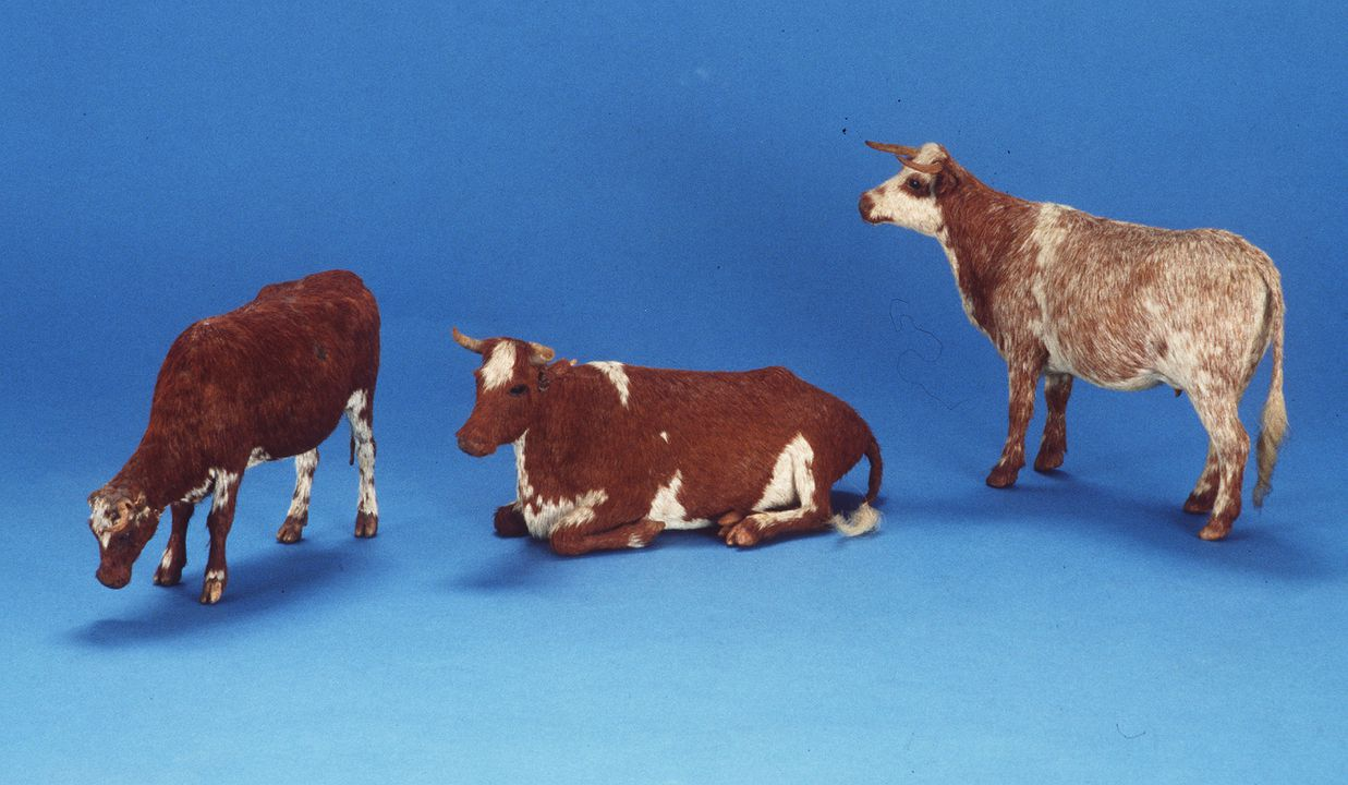 A10060 Animal figures (3), model cows, and information sheet, beeswax/papier-mache/cow hair/canna lily seeds/paper, handmade, made by Wilhelmina Jurd, New England area, New South Wales, Australia, 1870-1912. Click to enlarge.