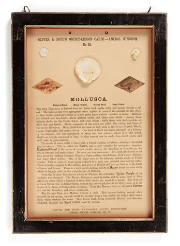 P416 Object lesson card, part of collection, 'Mollusca', framed, seashell / sepia / cardboard / glass / wood, published by Oliver and Boyd, Edinburgh, Scotland, 1880-1884