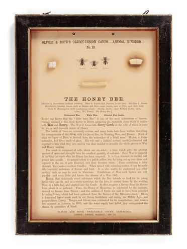 P414 Object lesson card, part of collection, 'The Honey Bee', framed, beeswax / cardboard / glass / wood / plastic / paper, published by Oliver and Boyd, Edinburgh, Scotland, 1880-1884