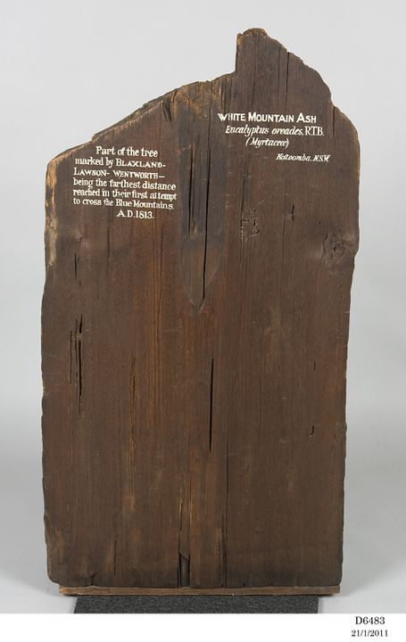 D6483 Timber specimen, White Mountain Ash (Eucalyptus oreades R T B), marked by Blaxland, Lawson and Wentworth, Australia, 1813. Click to enlarge.