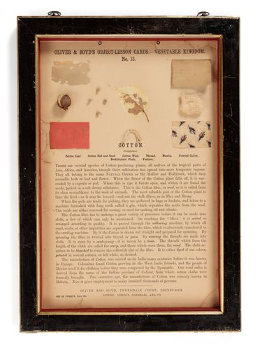 P431 Object lesson card, part of collection, 'Cotton', framed, leaf / seeds / cotton / cardboard / glass / wood / textile, published by Oliver and Boyd, Edinburgh, Scotland, 1880-1884