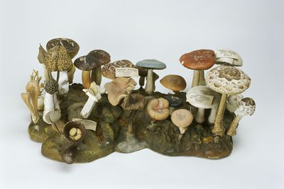 2796 Botanical models (30), edible and inedible fungi, made by Dr Louis Thomas Jerome Auzoux, France, 1880-1890