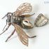 Image 3 of 3, 1150 Insect model, worker bee bearing wax, papier mache / metal / hair, made by Dr Auzoux, Paris, France, 1883. Click to enlarge
