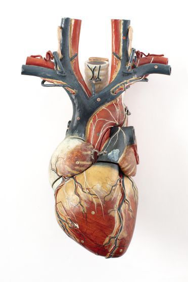 H3261 Anatomical model of a human heart, papier-mache / wood, imported by H B Selby & Co, made by Shimadzu Manufacturing, Japan, 1919