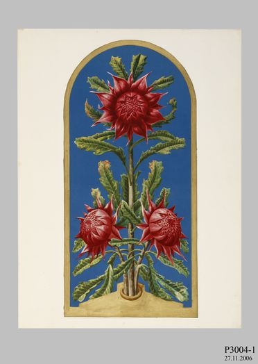 P3004 Design, 'Waratah Panel - oblong', from unpublished book, 'Australian Decorative Arts', watercolour and gouache over pencil, made by Lucien Henry, Australia / France, 1889-1891