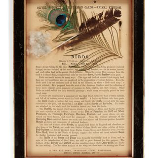 P411 Object lesson card, part of collection, 'Birds', framed, down / feather / cardboard / glass / wood / plastic / textile, published by Oliver and Boyd, Edinburgh, Scotland, 1880-1884